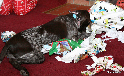 Lily loves wrapping paper