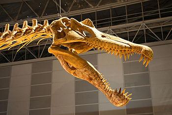 Spinosaurus - 04
